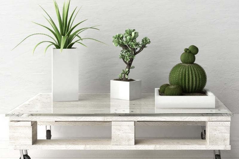 φυτά πάνω σε τραπεζάκι σαλονιού